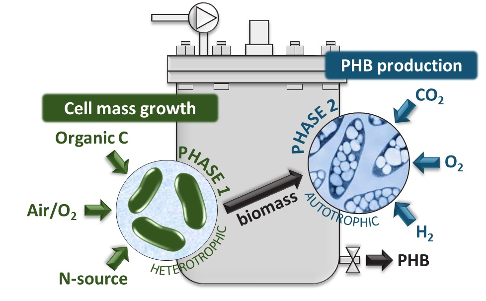phb production thesis Thesis defence l marang: pha production the aim of this thesis was to investigate scale-up aspects of the pha production by microbial (phb) production.